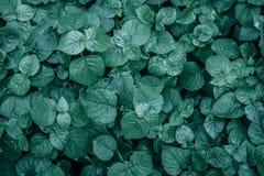 Mooie groene bladerenachtergrond Royalty-vrije Stock Foto's