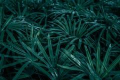 Mooie groene bladerenachtergrond Stock Afbeeldingen