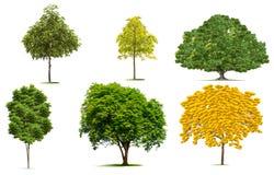 Mooie groene bomeninzameling Royalty-vrije Stock Fotografie