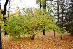 Mooie groene boom in de herfstpark Stock Foto