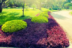 Mooie groene boom, installaties, bos en bloemen in de openluchttuinen en de parken stock fotografie