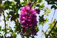 Mooie groene boom, installaties, bossteen en bloemen in de openluchttuinen en de openbare parken royalty-vrije stock foto's