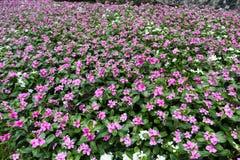 Mooie groene boom, installaties, bossteen en bloemen in de openluchttuinen en de openbare parken royalty-vrije stock afbeeldingen