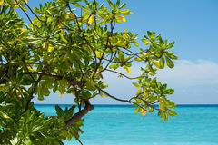 Mooie groene boom met oceaanmening Royalty-vrije Stock Afbeelding