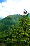 Mooie, groene die vallei met bossen wordt behandeld Stock Foto