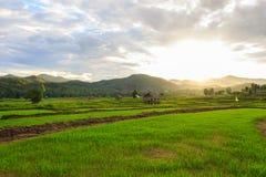 Mooie groene gebieden Stock Foto's