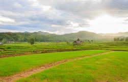 Mooie groene gebieden Royalty-vrije Stock Fotografie