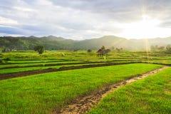Mooie groene gebieden Royalty-vrije Stock Foto's