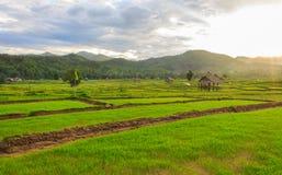 Mooie groene gebieden Stock Foto