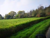 Mooie Groene gebiedsboom royalty-vrije stock fotografie