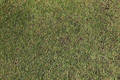 Mooie groene grasachtergrond Royalty-vrije Stock Afbeeldingen