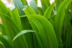 Mooie groene grasachtergrond Royalty-vrije Stock Foto's