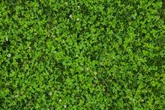 Mooie groene grastextuur royalty-vrije stock afbeeldingen