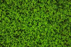 Mooie groene grastextuur stock afbeeldingen