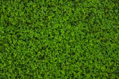 Mooie groene grastextuur stock foto's