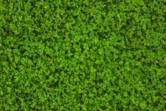 Mooie groene grastextuur royalty-vrije stock afbeelding