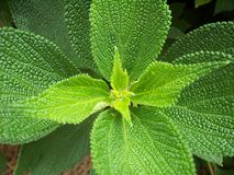 Mooie groene installatie stock afbeeldingen