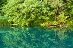 Mooie groene kleur van Mlava-rivier royalty-vrije stock foto's