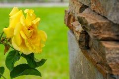 Mooie groene parken voor ontspanning royalty-vrije stock fotografie
