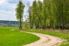 Mooie groene rand van een berkbosje en een landelijke landweg stock afbeelding