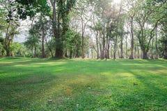 Mooie groene tuin royalty-vrije stock afbeeldingen
