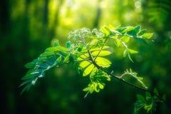 Mooie groene verse bladeren op boom Stock Fotografie