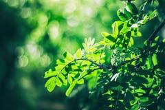 Mooie groene verse bladeren op boom Stock Afbeeldingen