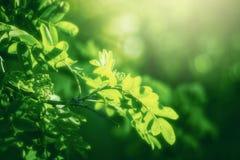 Mooie groene verse bladeren op boom Royalty-vrije Stock Foto