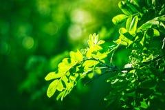 Mooie groene verse bladeren op boom Stock Foto's