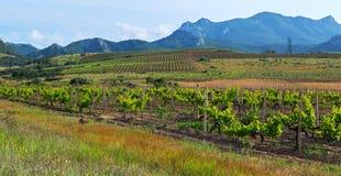 Mooie groene wijngaarden op gebieden in bergen van de Krim Stock Foto