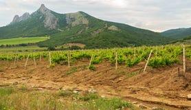 Mooie groene wijngaarden op gebieden in bergen van de Krim Stock Fotografie
