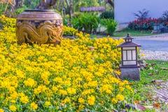 Mooie grote aarden kruik met gele die draak in de gele bloemtuin wordt gevormd stock afbeelding
