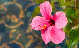 Mooie grote bloem Stock Foto