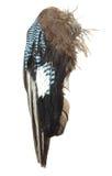 Mooie grote die vogelvleugels op een witte achtergrond worden geïsoleerd Stock Afbeelding