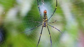 Mooie grote spin op Web Royalty-vrije Stock Afbeeldingen