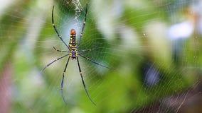 Mooie grote spin op Web Stock Afbeelding