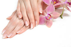 Mooie hand met perfecte spijker Franse manicure Stock Afbeeldingen