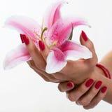 Mooie handen die lelie houden Stock Afbeeldingen