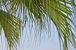 Mooie hangende lijnen van groene palmbladen stock foto's