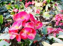 Mooie hdbloem Stock Afbeeldingen