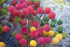 Bloemen bij de Markt van de Landbouwers, San Gimignano, Italië Royalty-vrije Stock Foto's