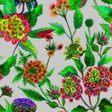 Mooie heldere lantana of van Brazilië ijzerkruidbloemen op grijze achtergrond Naadloos de zomer bloemenpatroon Het Schilderen van Royalty-vrije Stock Foto's