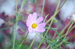 Mooie heldere roze bloemen die in de tuin groeien Close-up van roze bloemen met vage achtergrond Stock Foto's