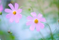Mooie heldere roze bloemen die in de tuin groeien Close-up van roze bloemen met vage achtergrond Royalty-vrije Stock Fotografie