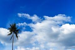 Mooie hemel en kokospalm royalty-vrije stock afbeelding