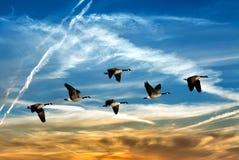 Mooie hemel met vliegende vogels natuurlijke achtergrond royalty-vrije stock afbeelding
