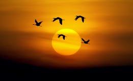 Mooie hemel met vliegende vogels natuurlijke achtergrond stock afbeeldingen