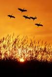 Mooie hemel op zonsondergang of zonsopgang met vliegende vogels natuurlijke bac stock foto