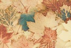 Mooie herfstachtergrond van bladeren royalty-vrije stock foto's