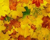 Mooie herfstachtergrond van bladeren stock afbeeldingen